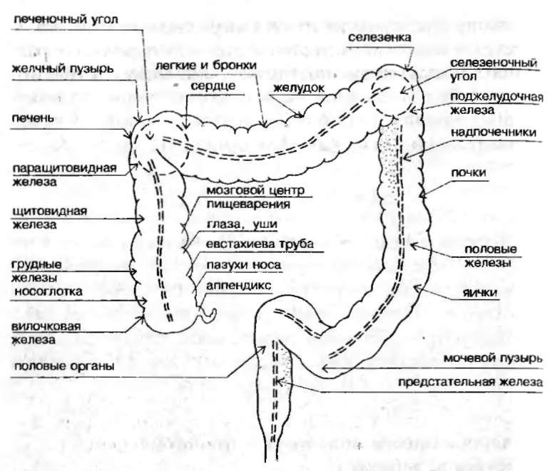 лечебное очищение кишечника
